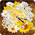 Daisy Sun Flower Clock Widget file APK Free for PC, smart TV Download