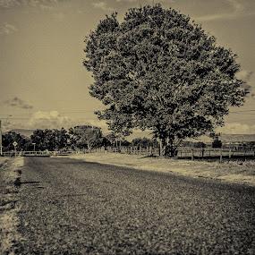 tin type tree road by Jgr Jgr - City,  Street & Park  Neighborhoods