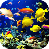 Fish Aquarium Live WallpaperHD