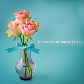 Roses by Anita  Christine - Typography Quotes & Sentences ( photos, valentine's day, rose, pastel, heart, nature, blue, roses, pink, valentine, typography, design )