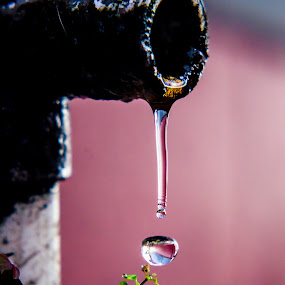 Drain Pipe Droplet by Emily Stillings - Nature Up Close Natural Waterdrops ( water, plant, e.j.stillings photography, nourishment, drop, weed, leaf, thirst, drain, suspended, pipe, time, quenched, red, life, droplet, grow, dripping, emily stillings, sprout, pink, growth, live, , color, colors, landscape, portrait, object, filter forge )