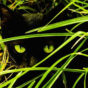 meow by Julius Lozada - Animals - Cats Kittens ( marlo lozada, dee zafra lozada )