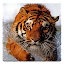 Animal Wallpapers! 3.3 APK for Android