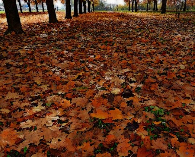 Autumn by Nat Bolfan-Stosic - Nature Up Close Leaves & Grasses ( fall leaves on ground, fall leaves, autumn, bright, colors, dark, leaves )