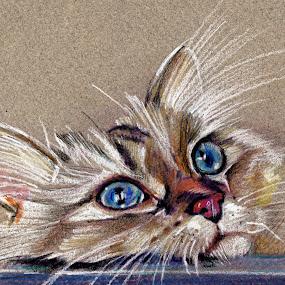 Cat drawing  by Daliana Pacuraru - Drawing All Drawing ( cat face, daliana pacuraru, cat eyes, cat portrait, cat drawing,  )