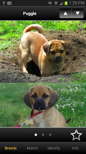 Perfect Dog Free