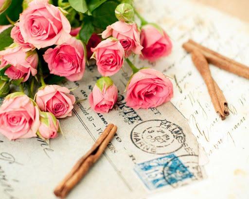 玫瑰綻放壁紙
