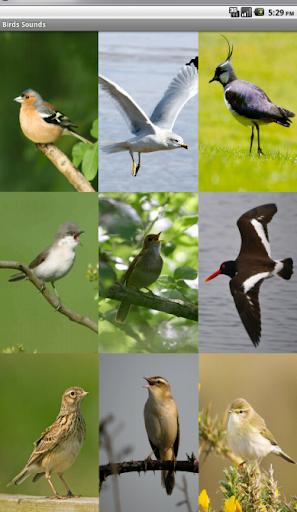 Birds Sounds اصوات الطيور