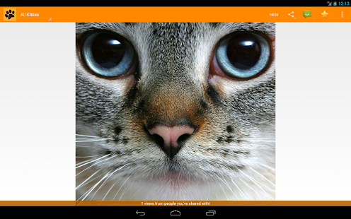 Cat of the Day- screenshot thumbnail