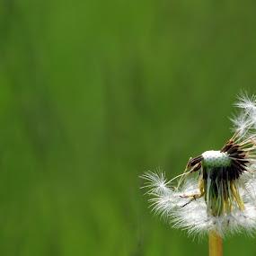 by Randi Grace Nilsberg - Flowers Flowers in the Wild