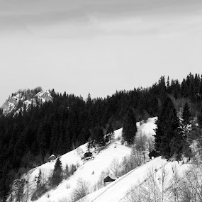 Up in the mountain by Remus Lungu - Landscapes Mountains & Hills ( hills, mountains, mountain, tree, mountain village, snow, moeciu, black and white, b&w, landscape )