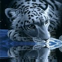 White Tiger Drink Blue Water logo