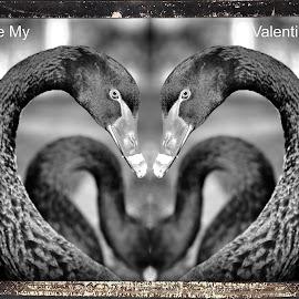 A Darker Valentine by Dark Reid - Typography Captioned Photos ( love, valentine's day, cupid no longer, postcard,  )