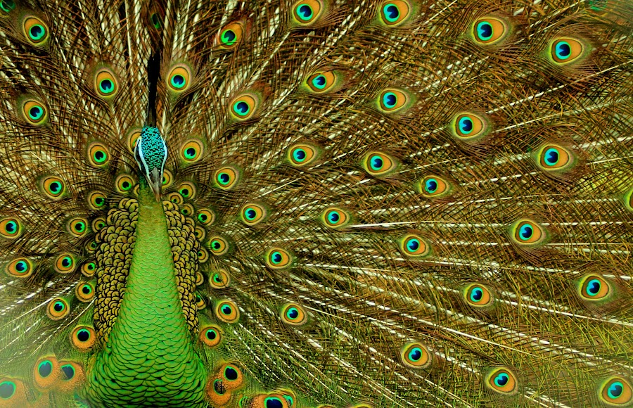 by Mhd Rizky - Animals Birds