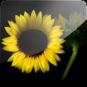 3D Sunflower I (PRO) logo