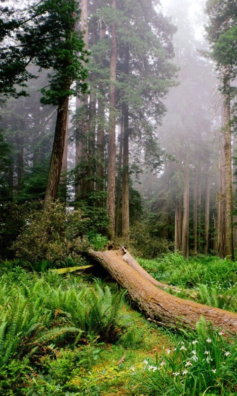 3d forest hd live wallpaper google play store revenue for 3d wallpaper for home south africa