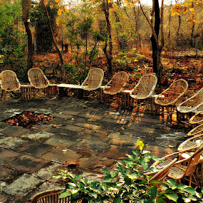 Social Circle by Tamsin Carlisle - Artistic Objects Furniture ( rattan, chair, jungle, outdoor, trees, forest, india, circle, courtyard, , Chair, Chairs, Sitting, relax, tranquil, relaxing, tranquility )