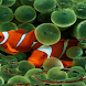 Clown Fish Virtual Pond LWP