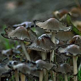 Autumn  fruits by Gordon Simpson - Nature Up Close Mushrooms & Fungi