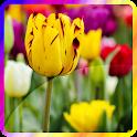 Flower Rose Tulip Wallpaper icon