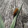 Fuzzy Caterpillar