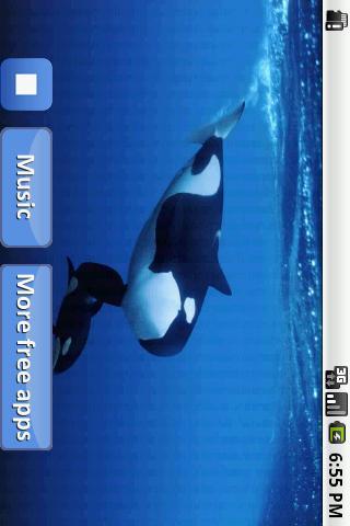 睡覺的鯨魚歌曲