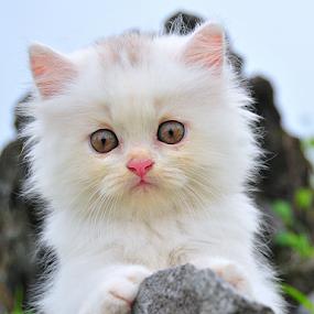 by Wahyu Jr. Abadi - Animals - Cats Kittens ( cats, lion, kitten, cat,  )