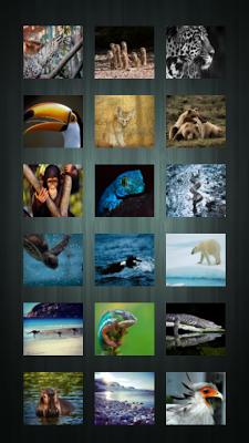 Wild animals wallpapers - screenshot