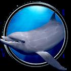 Dolphins Eintauchen 3D icon