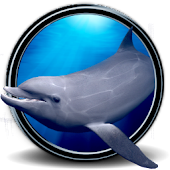 Dolphins Real 3D