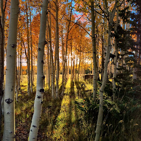 Autumn Rays by Blaine Cox - Instagram & Mobile iPhone