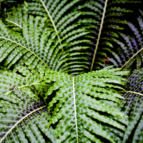 Growing Life by Danielle Falknor - Nature Up Close Leaves & Grasses ( tropical plant, fern, fern leaves )
