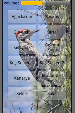 Kuş sesi - screenshot