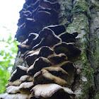 Even more fungi