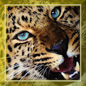 Leopard Jungle live wallpaper icon