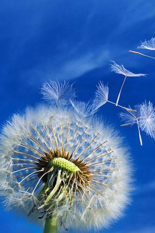 Galaxy S3 Dandelion LWP - screenshot