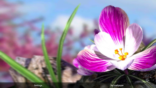 Nature Live❁ Spring Flowers XL Apps for Android screenshot