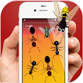 Ants in Phone Insect Crush