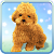 Talking Teddy Bear Dog file APK for Gaming PC/PS3/PS4 Smart TV