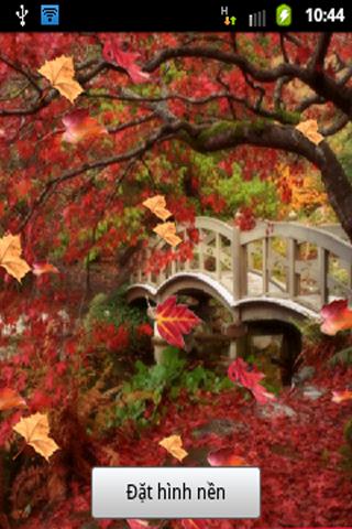 【免費個人化App】Autumn Leaf Live Wallpaper-APP點子