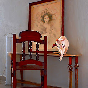 portrait of a cat by John Kolenberg - Animals - Cats Portraits ( chair, cat, white, table, painting, portrait, , #GARYFONGPETS, #SHOWUSYOURPETS )