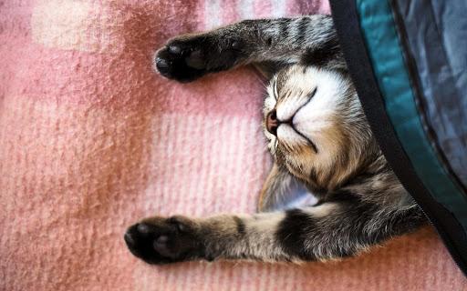 【免費個人化App】Cats Wallpapers HD-APP點子
