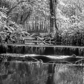 Tranquility by Lynnie Adams - Black & White Landscapes ( water, black and white, long exposure, woods,  )
