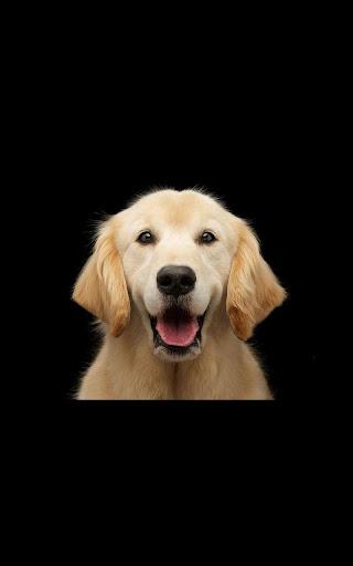 玩個人化App|Dog Live Wallpaper免費|APP試玩