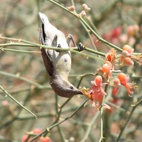 by Harshad Dhapa - Animals Birds