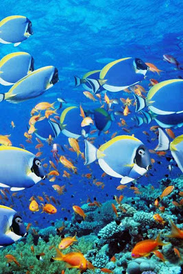 Fish Wallpaper - screenshot