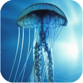 3D Jellyfish HD Live Wallpaper