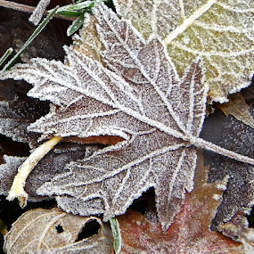 Frosty Leaves by Maureen Rueffer - Abstract Patterns (  )
