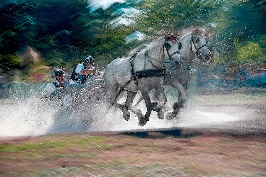 Marathon by Milan Malovrh - Animals Horses ( lipicanci,  )