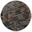 Mossy Oak Brown Circle Theme
